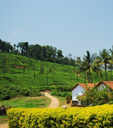 Natural Beauty of Western Ghats